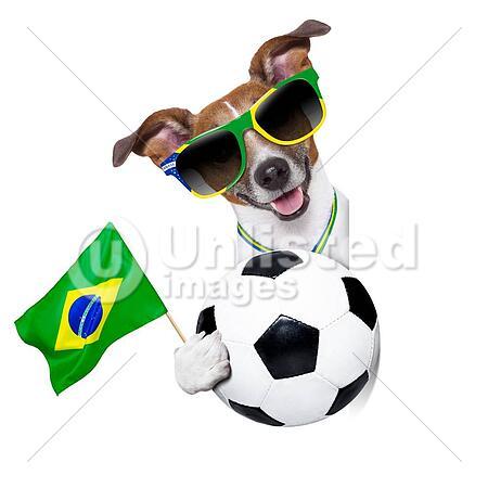 fifa world cup german dog waving flag behind banner