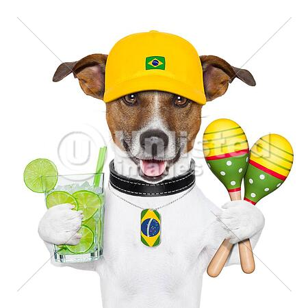 funny brazilian dog with caipirinha and rattle shakers