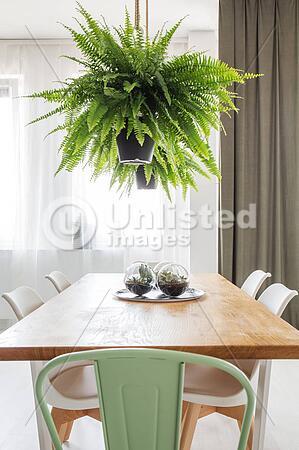 Fern In Bright Dining Room